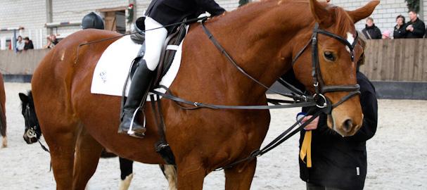 Pferd Suse