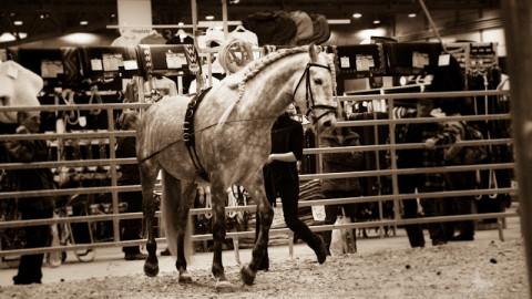 …die Pferde Messe in Leipzig