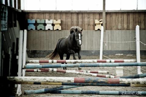 Pferde Freispringen auf dem Reiterhof