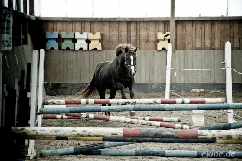 Pferd beim Freispringen