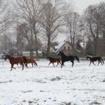 Pferde Videos