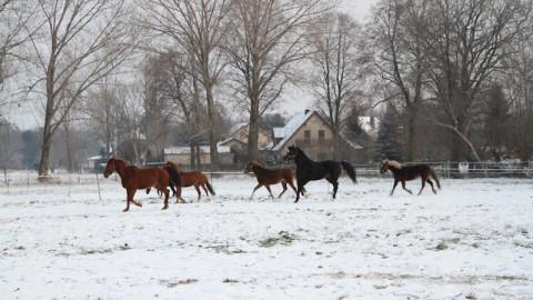 Die schönsten Pferde Videos