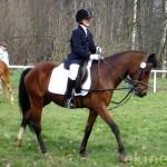 Reiterwettbewerb Sachsen