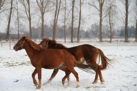 Pferdestärken im Winter