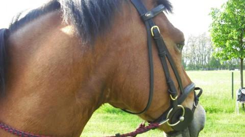 Pferde…