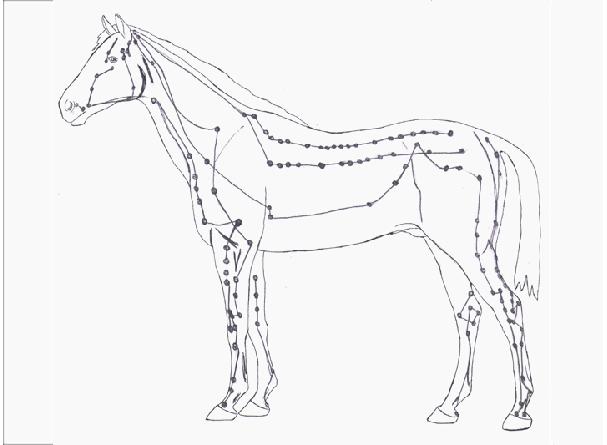 20091216-akupunktur_pferd