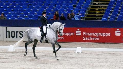 Partner Pferd – Dressage