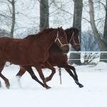 20100216-portraitbilder-pferde-002