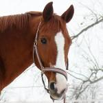20100216-portraitbilder-pferde-003