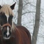 20100216-portraitbilder-pferde-005