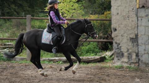 Reitschüler zu Pferd