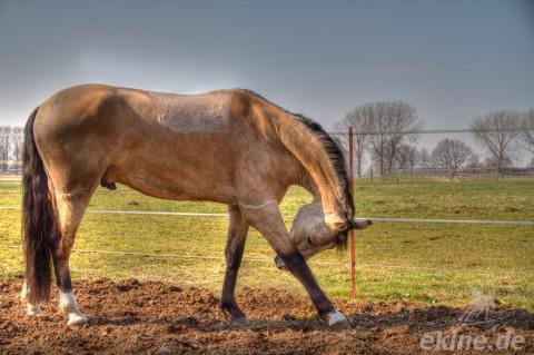 Pony Filou bei Sonnenschein