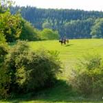 20110518-vielseitigkeit-training-hennersdorf-005