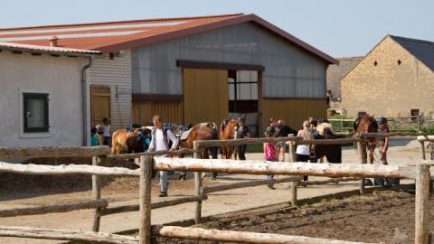 Fotos von der 4. Sommer Reiterferien Woche