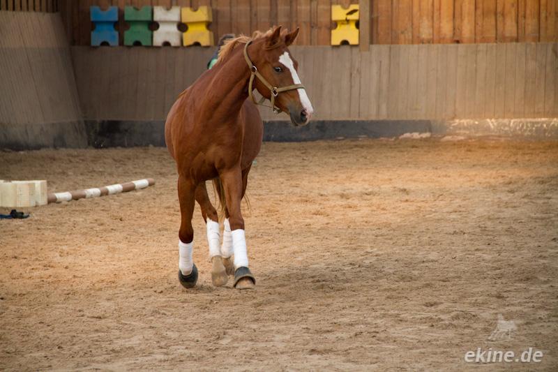 Sachsen Pferde