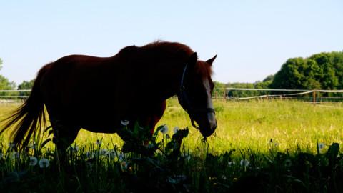Pferde Fotos auf der Frühlings Koppel