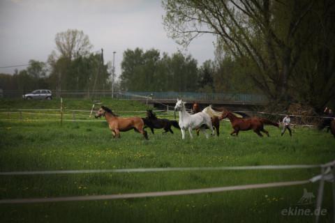 Beginn der Pferde Weidesaison