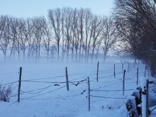 pferde-im-winter-2