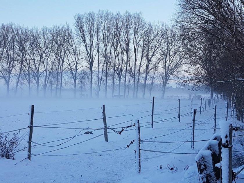 pferde-im-winter-2-2