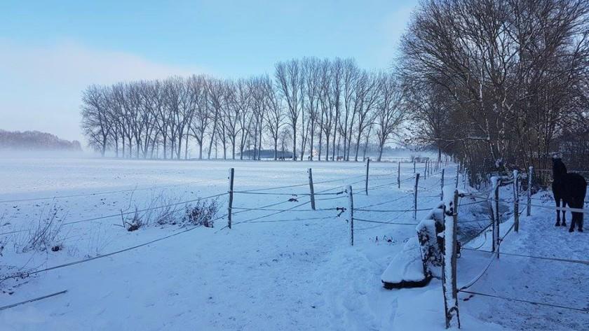 pferde-im-winter-7