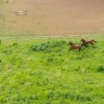 pferde03